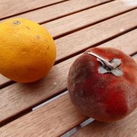 Nouveau fruit : le mabolo